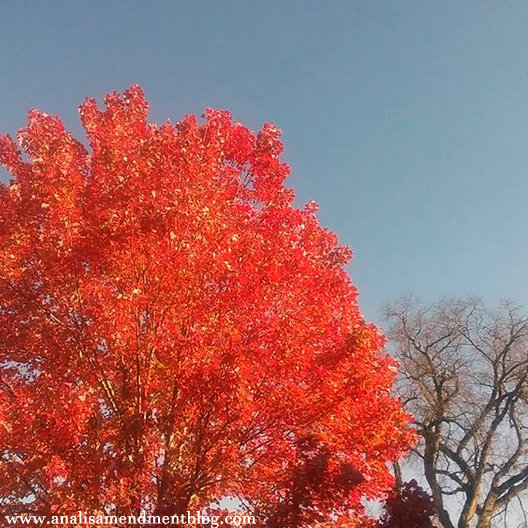 A tree with bright orange leaves next to a bare tree against blue sky.