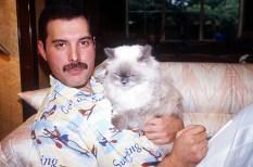 Mercury era fanático de los gatos y poseia varios.. Freddie llegaba al grado de llamarle por teléfono a sus gatos cuando se iba de viaje.