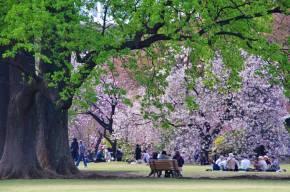 El Jardín Nacional Shinjuku Gyoen está considerado este como uno de los más importantes jardines que datan de la era Meiji/ Foto: Turismo de Japón