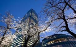 La floración de los cerezos es una razón casi suficiente para hacer un viaje a Tokio en primavera/ Foto: Turismo de Japón