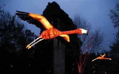 Flamingo/ Foto: Referencial