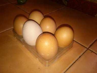 huevos proteina