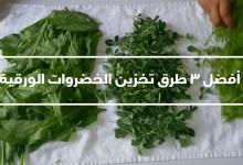 Photo of طريقة حفظ الخضروات الورقية