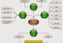 Photo of المحرمات من النساء للزواج فى الإسلام
