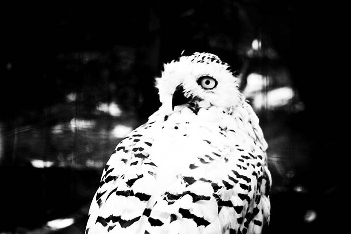 birds_06