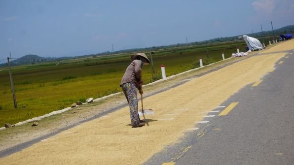 This is how the rice is dried - by throwing it on the roads with little traffic