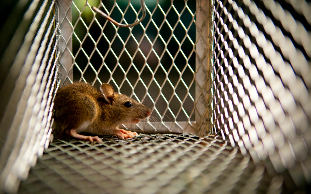 The Rat Park Experiment: How Environment Affects Behavior