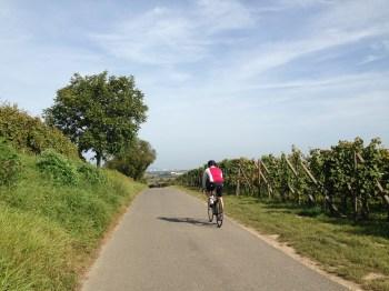 Na ciclovia ainda pedalando com vinhedos ao lado