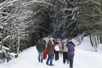 Caminhada pela floresta de pinheiros