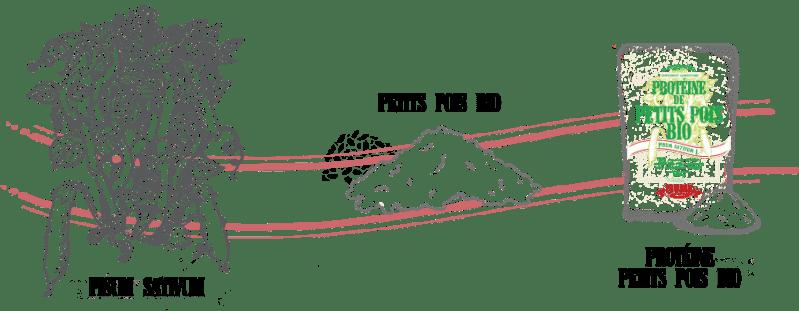 Pisum sativum - PETIT POIS BIO - PROTÉINE DE PETITS POIS BIO