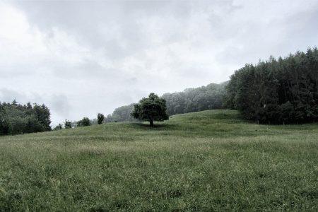 Regen kann auch schön machen - ein mystischer Baum in den Regenfluten Anfang Juni 2012. (Foto: Martin Dühning)
