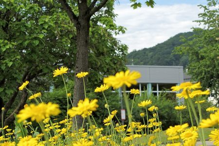 Auch beim Klettgau-Gymnasium blüt es gelbem Licht. (Foto: Martin Dühning)