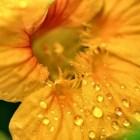Das Niarts-Blumenprogramm 2013