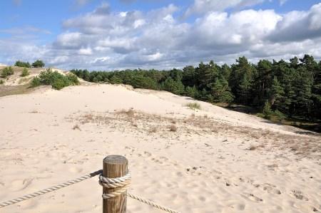 Der Küstenwald geht in Sandwüste über (Foto: Martin Dühning)