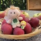 Äpfelchenernte