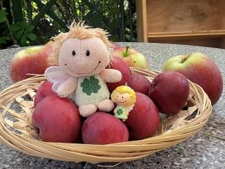 Die Apfelernte 2016 reichte immerhin für ein kleines Obstkörbchen (Foto: Martin Dühning)