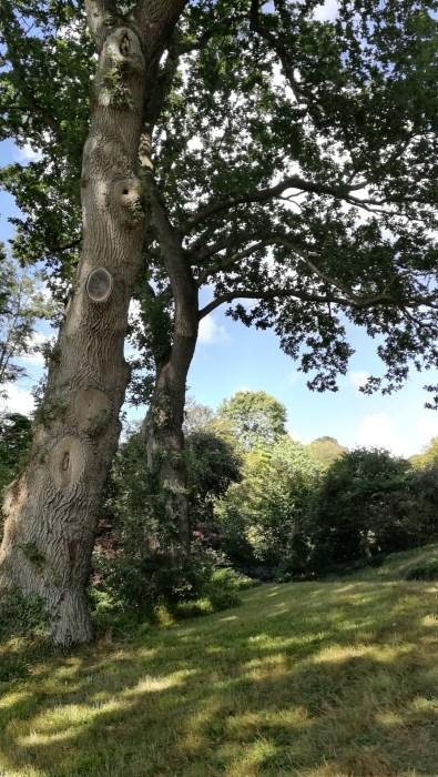 Alte Bäume im Park (Foto: Martin Dühning)