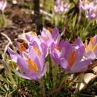 Ein kleines bisschen Frühling...