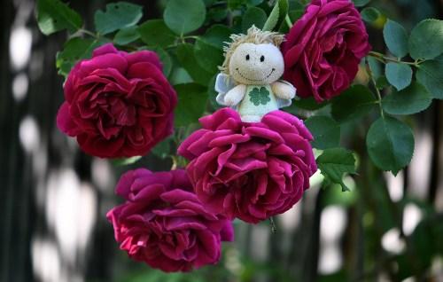 Blumenfee auf Opas Rosen... (Foto: Martin Dühning)