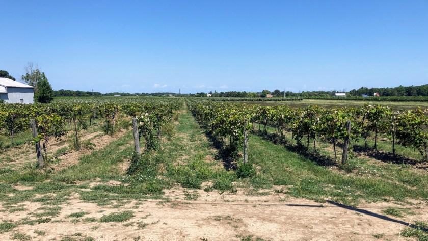 Wine country along the Niagara Escarpment on the Cannonball 300