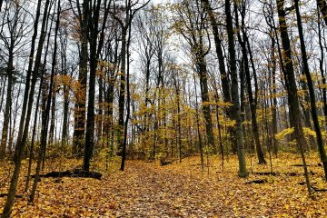 A picture of the leaves fallen on the trail at Sugarbush Mills Heritage Park.