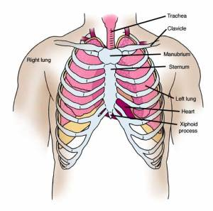 Anatomy Atlases: Anatomy of First Aid: A Case Study
