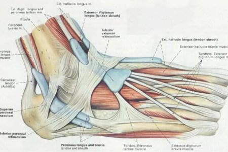 interior calcaneonavicular ligament » Free Interior Design   Mir Detok