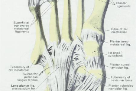 Interior Aspect Of Foot Free Interior Design Mir Detok