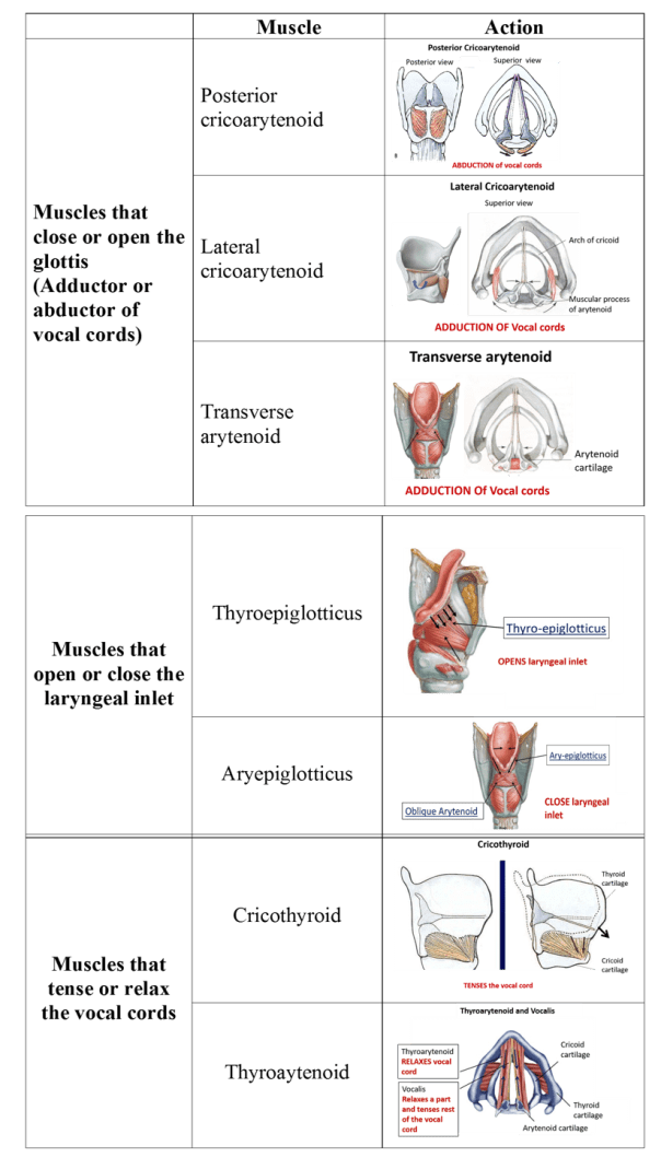intrinsic muscles of