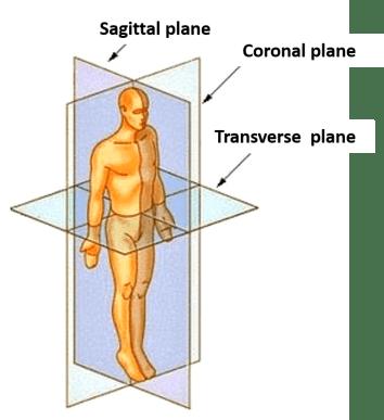 Anatomical Terminology -