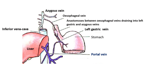 veins of oesophagus