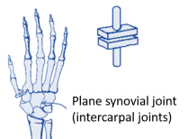 plane synovial joint