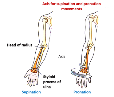 axis for supination and pronation