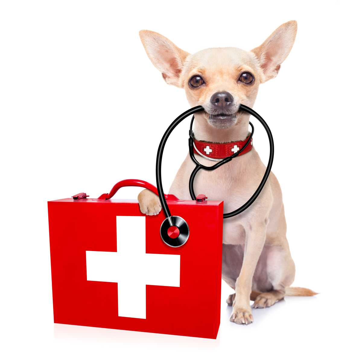 Veterinary1