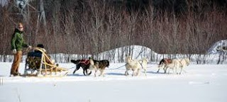 Dog Sledding - Wikipedia