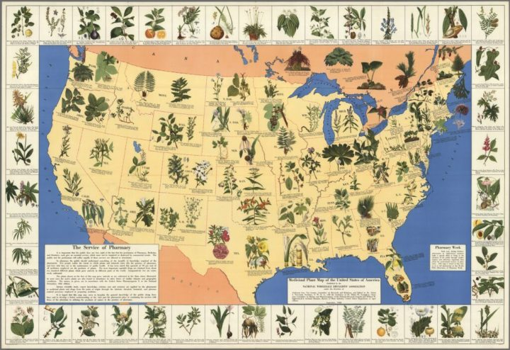 Incredible Ancient Map of Natural Herbal Cures Released to Public