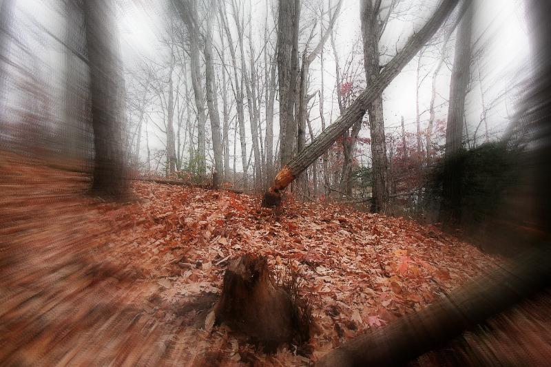 Pese a que los nativos americanos se negaron a adentrarse en el bosque, el coronel Blair y sus hombres, construyeron un fuerte en los bosques de Black Hills. (Ken Mayer/CC BY-SA 2.0)