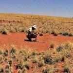 Investigadores resuelven el misterio de los círculos de hadas del desierto de Namibia
