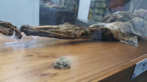 Momia de Guano y ratón momificado