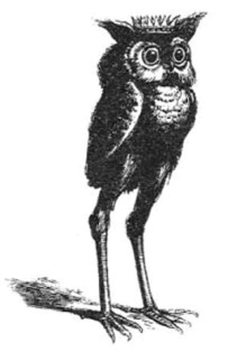 Stolas en la ilustración del Diccionario Infernal de Collin de Plancy. (Public Domain)