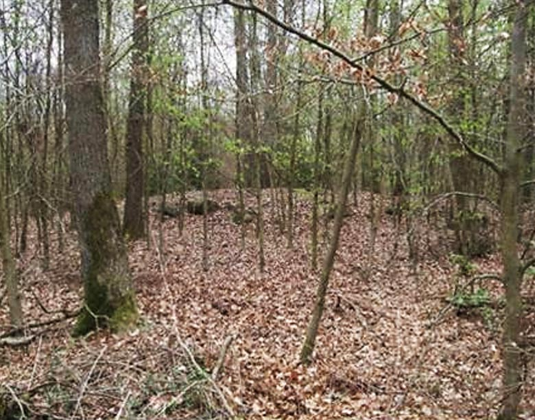 Una de las tumbas descubierta mediante ALS cerca de Dolice – estado actual. (M. Szydłowski)