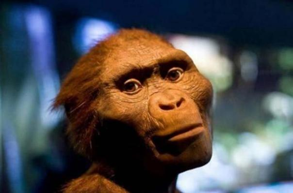 """La exhibición de Tesoros Ocultos de Etiopía en el Museo de Ciencias Naturales de Houston con un modelo de """"Lucy"""". (Jason Kuffer/CC BY NC ND 2.0 )"""