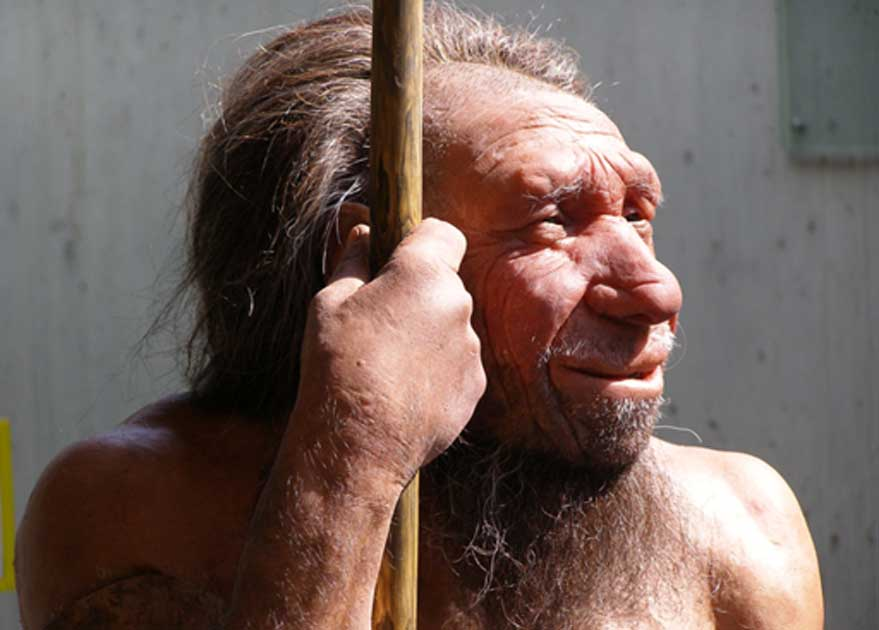 Oldest Neanderthal Wooden Tools Found In Spain Were Made