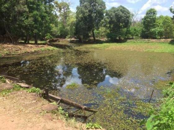 An artificial lake by the Koh Ker pyramid.