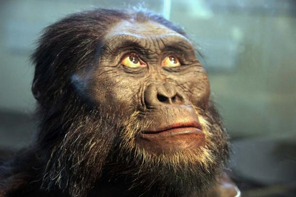 Photo of a head model of an Australopithecus afarensis adult male exhibited in the Smithsonian Museum of Natural History.
