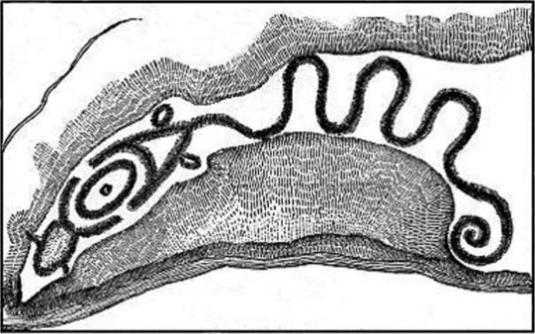 Gran Serpiente Mound, Ohio, McClen 1885 boceto.  Crédito: Pueblos Indígenas Research Foundation.