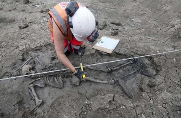 The Medieval skeleton. (MOLA Headland Infrastructure)