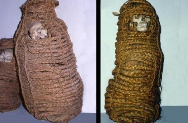 La antigua momia [derecho] era una mujer que murió en el siglo 11 en el Perú.  Su intestino reveló genes resistentes a los antibióticos.  En total, 11 tales momias conservadas estaban en la colección del museo.