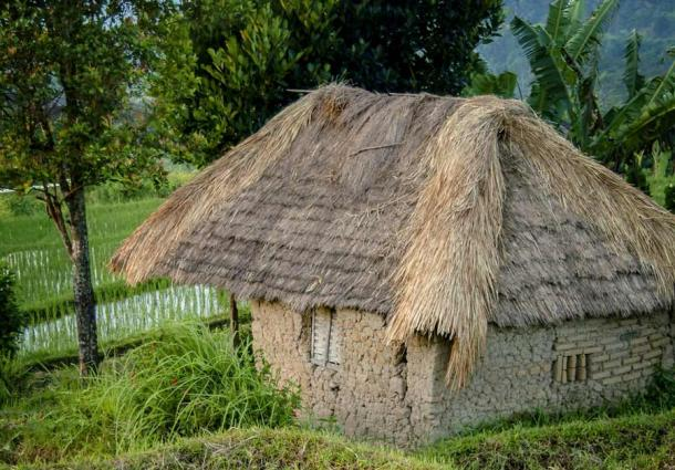 This mud and bamboo house in Bali, Indonesia, with rice paddies in the background, captures what the Chinese Baodun style of wattle and daub construction must have looked like based on the carbonized bamboo fragment recently unearthed at the archaeological site in Chengdu, China.                                                    Source: LoweStock / Adobe Stock