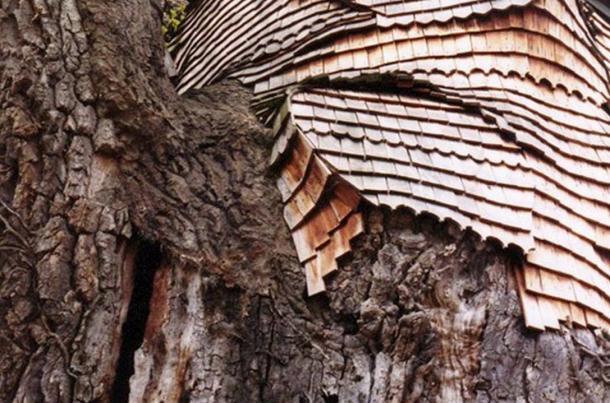 Une couche protectrice de bardeaux de chêne recouvre maintenant l'arbre.